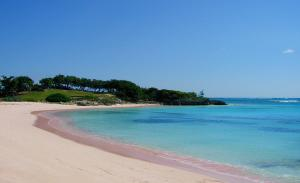 Bahamas - a beach with pink sands